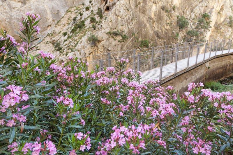 Fotvandra slingan Caminito del Rey Malaga landskap, Spanien arkivbild