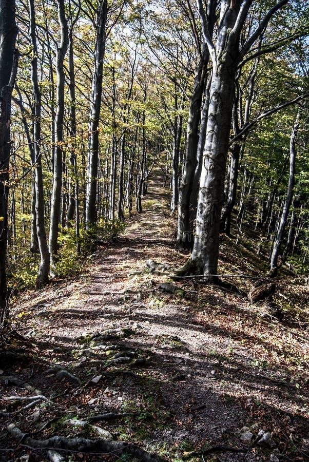 Fotvandra slingan i höstbergskog böla den Ladonhora kullen i Slovakien fotografering för bildbyråer