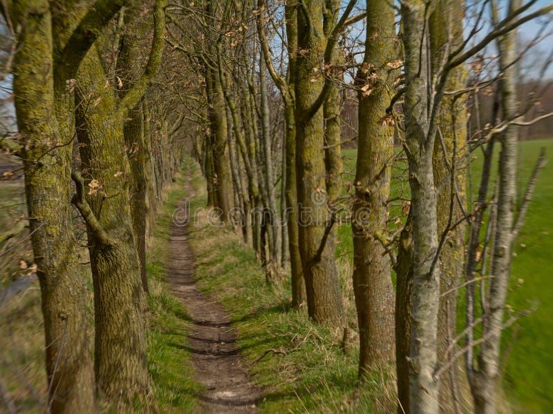 Fotvandra slingan till och med ett flemish fält med en gränd av kala träd, selektiv fokus med lensbaby suddighet arkivfoto