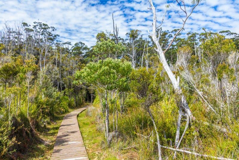 Fotvandra slingan till och med Tasmanian vildmark på Hastings grottor royaltyfria bilder