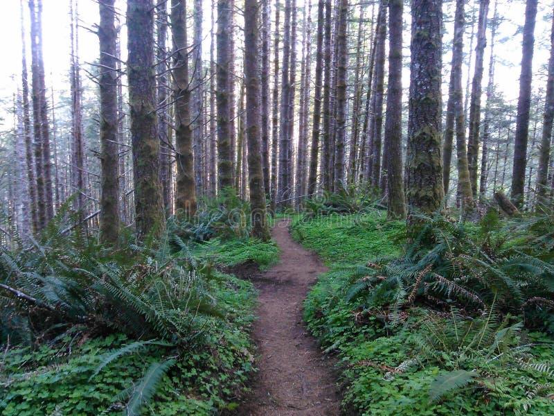 Fotvandra slingor i Oregon royaltyfria foton