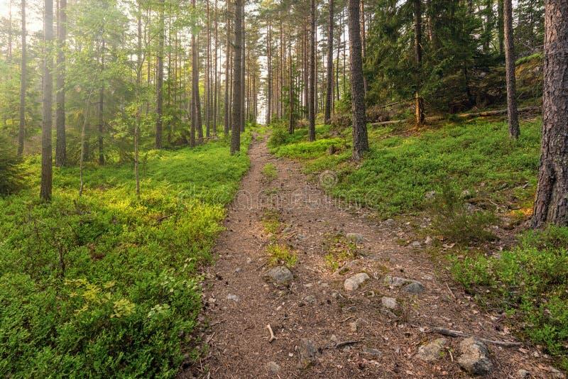 Fotvandra spåret i skog i försommar arkivfoto