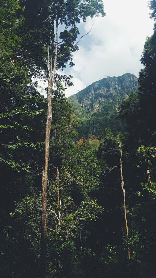 Fotvandra till den langkawi Malaysia vattenfallet arkivfoton