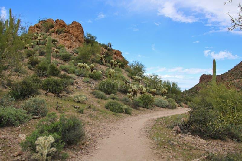 fotvandra trail för öken royaltyfri foto