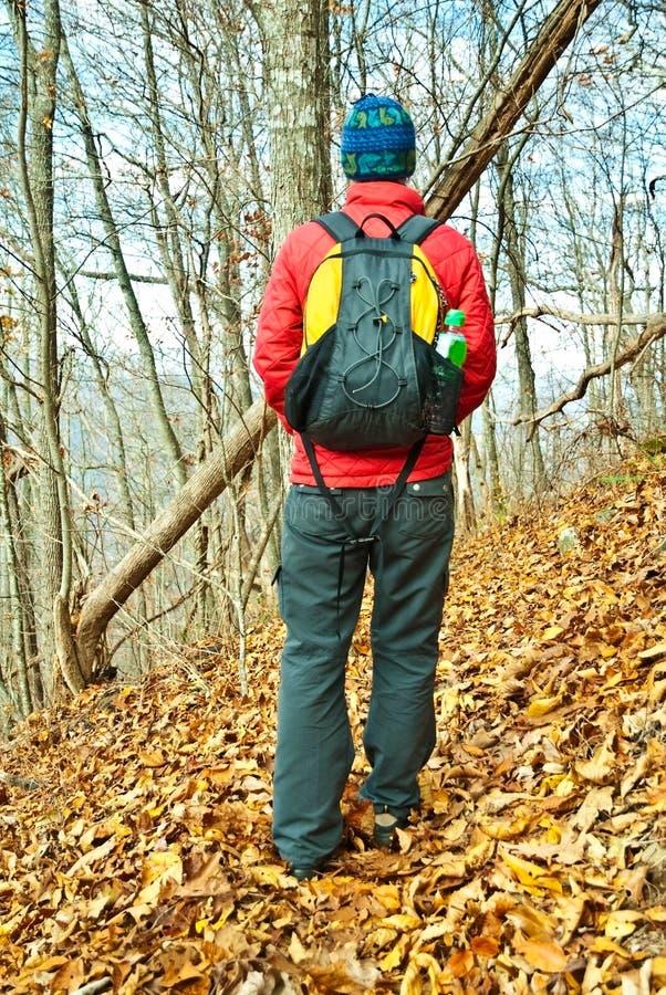 fotvandra trail för höst royaltyfria foton