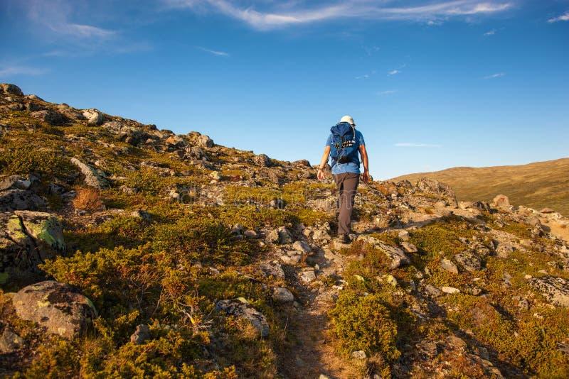 Fotvandrare med ryggsäckresande i Norge berg Dovre royaltyfri bild