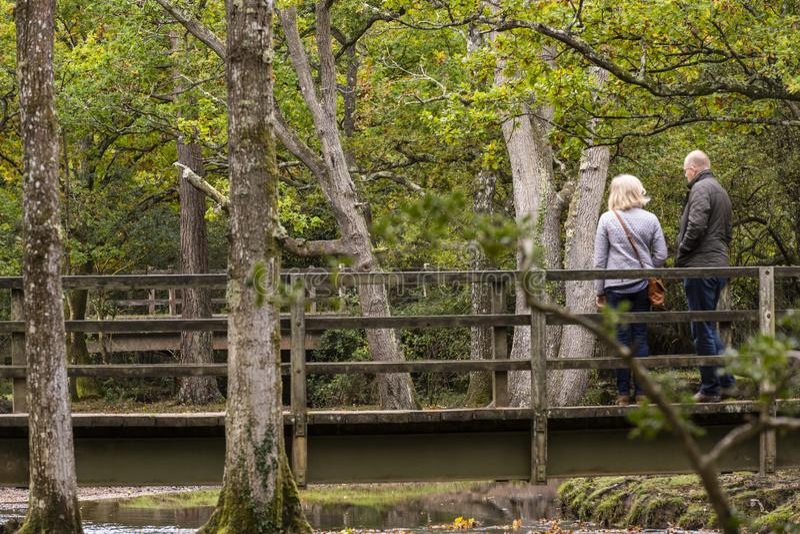Fotvandrare på ny skog för Puttles bro royaltyfri bild