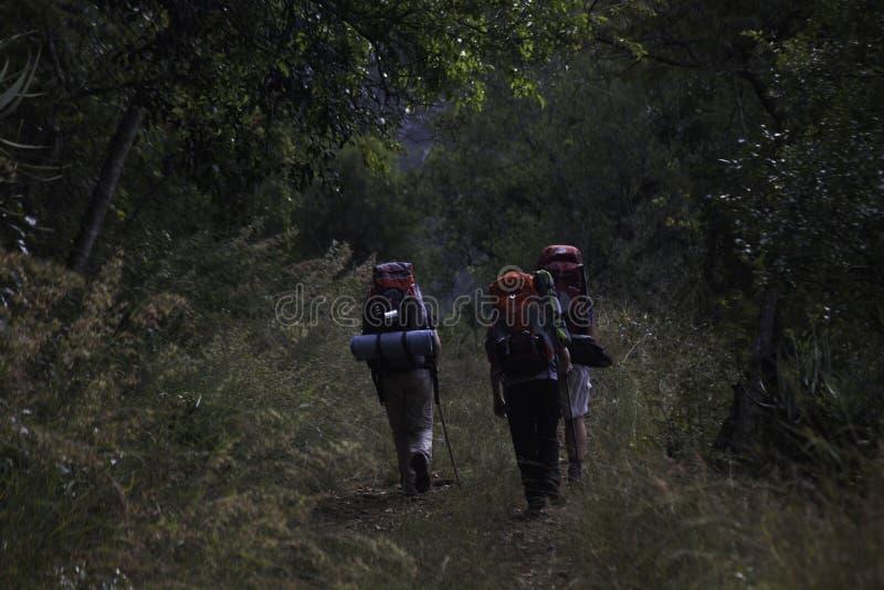 Fotvandrare som stiger upp en bergskedja för Forest Path In The `-Wolkberg `, Limpopo, Sydafrika fotografering för bildbyråer