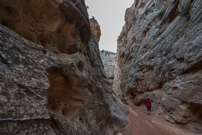 Fotvandraren i södra poppel begränsar nära vägen 400 Utah arkivfoton