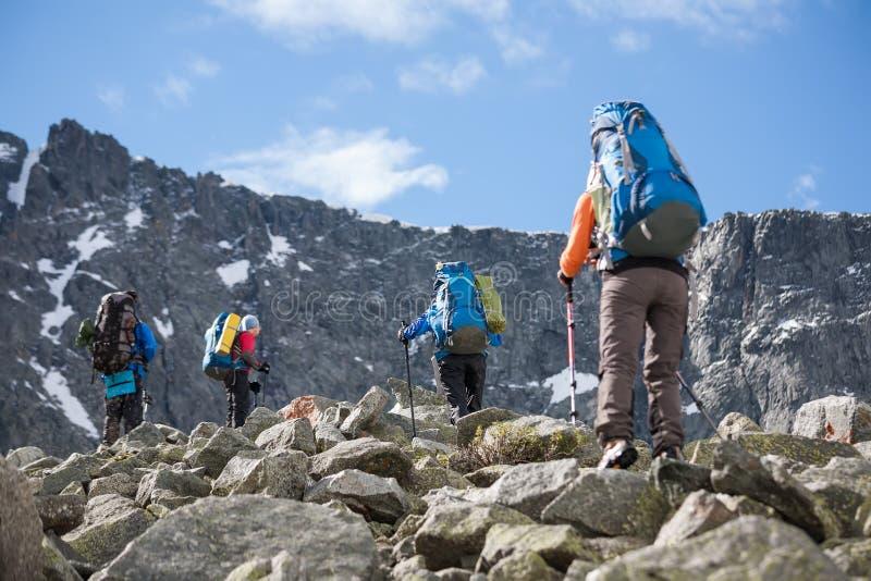 Fotvandraren passerar snöfältet i stenigt berg i det Altai berget arkivfoton