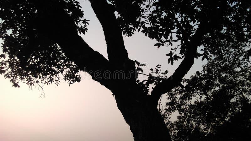 Foudre de coucher du soleil sur une colline image libre de droits