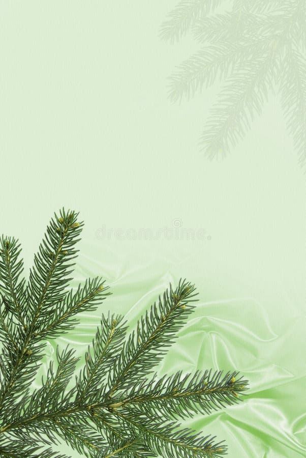 Fougère de Noël sur la soie illustration libre de droits