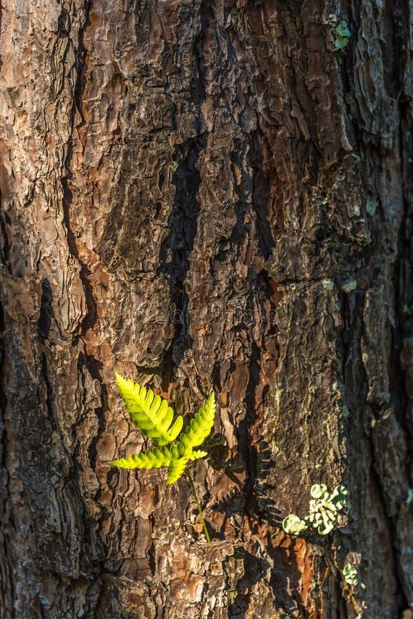 Fougère sur le fond d'arbre images stock