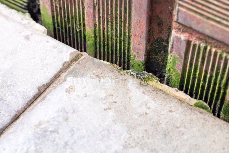 Fougère sur le vieux mur de briques images libres de droits