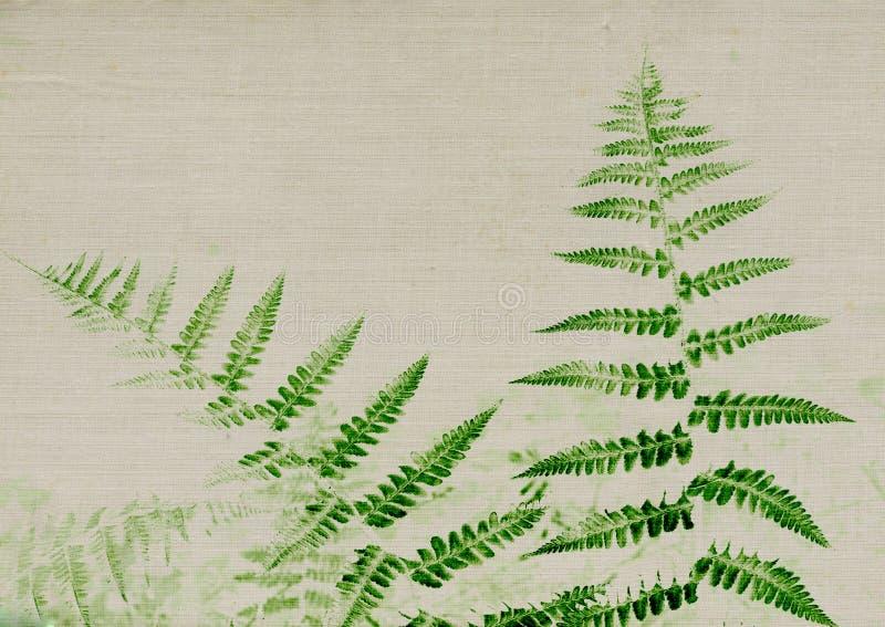 Fougère vert-foncé sur la texture gris-clair images stock