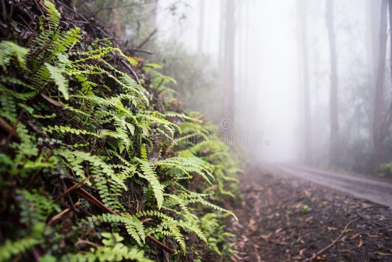 Fougères dans la forêt photographie stock libre de droits