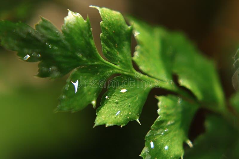 Fougères de pluie de ressort photos libres de droits
