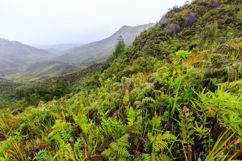 Download Fougères Et D'autres Usines Dans Les Montagnes Un Matin Brumeux Dans L'Af Photo stock - Image du brouillard, beau: 76086322