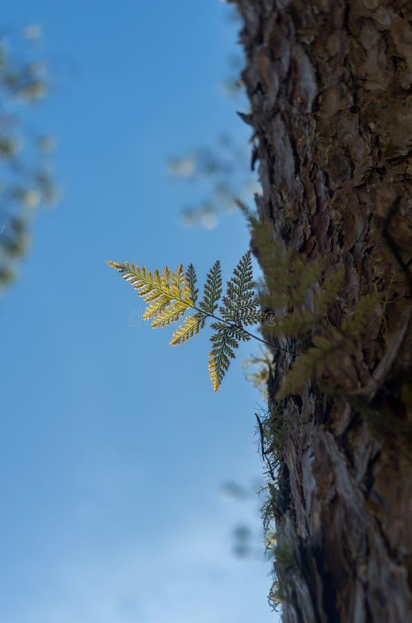 Fougères, lichens et mousse dans la forêt de pin image stock