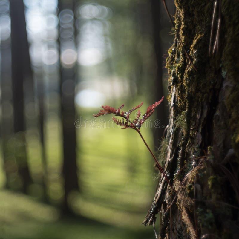 Fougères, lichens et mousse dans la forêt de pin photos libres de droits