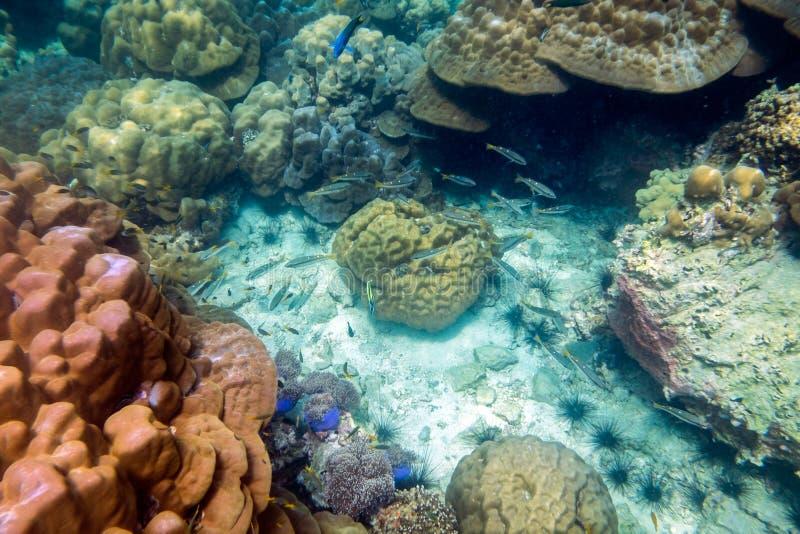 Foule colorée sous-marine de poissons de récif coralien de la vie image libre de droits