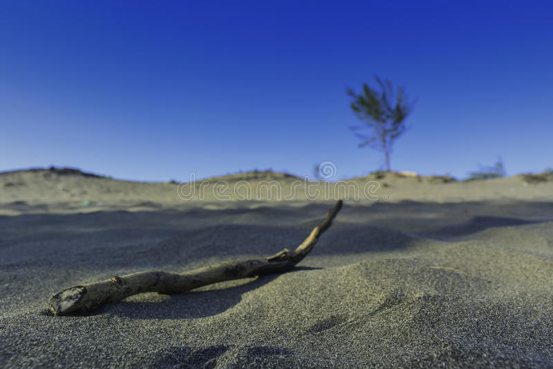 Branch on the sand stock image