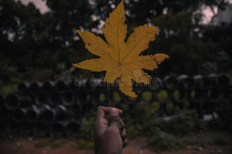 That yellow leaf stock photo