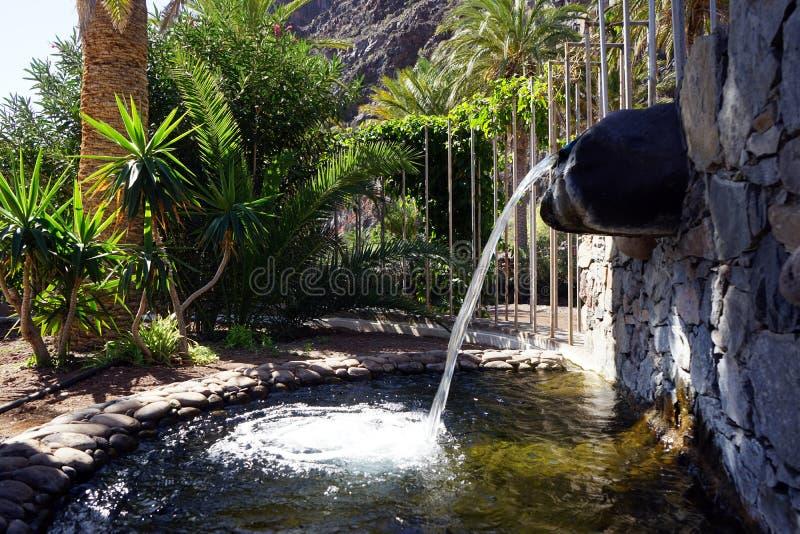 Fountain and palm tree. On the La Gomera island, Spain stock image