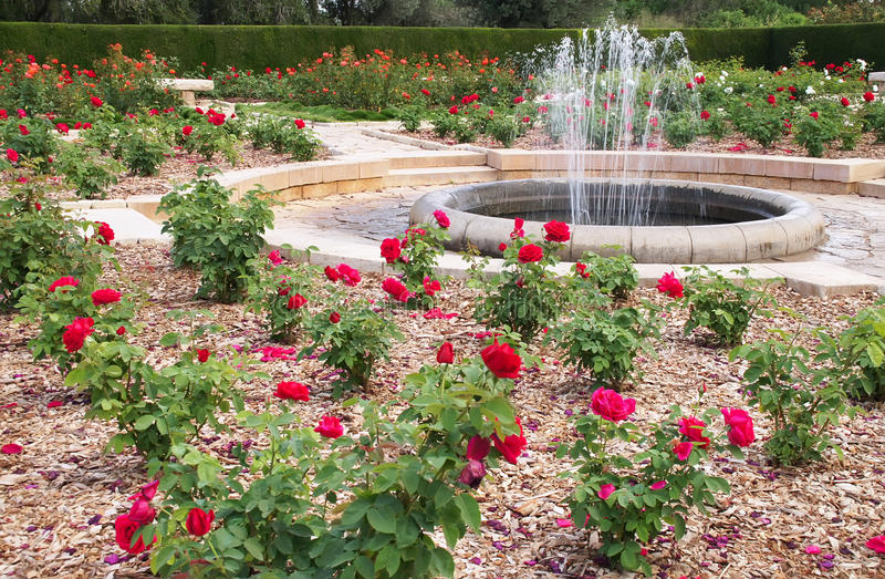 Fountain and roses in the park stock photography