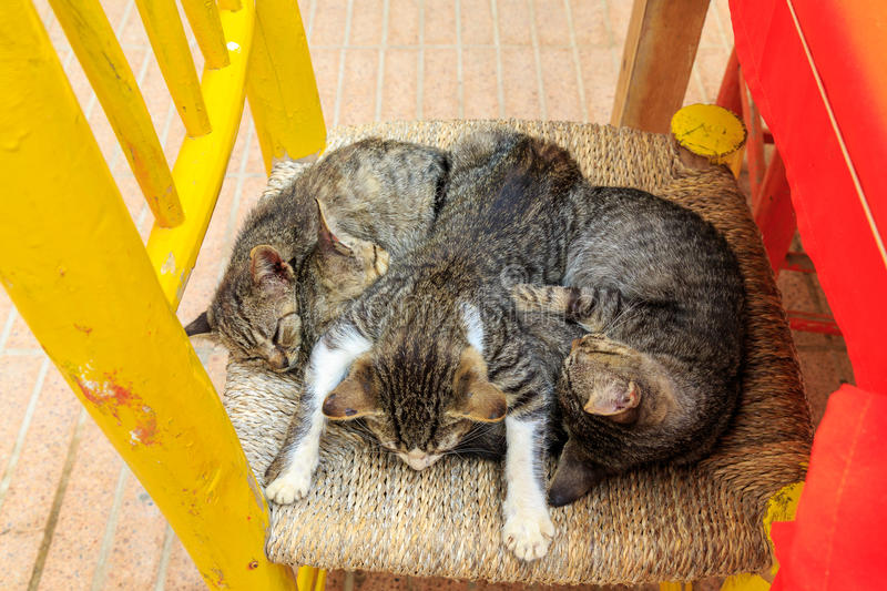 Four adorable kittens sleeping on a chair in Essaouira in Morocco royalty free stock images