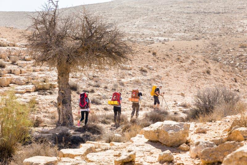 Four backpackers hiking trail near tree, Negev desert, Israel. stock image