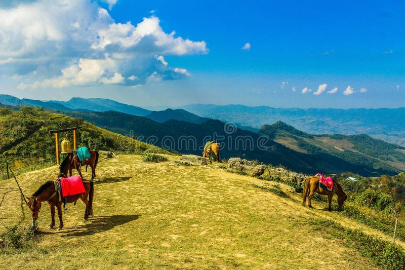 Four Brown Horses in Mountain Under Blue Skies stock image