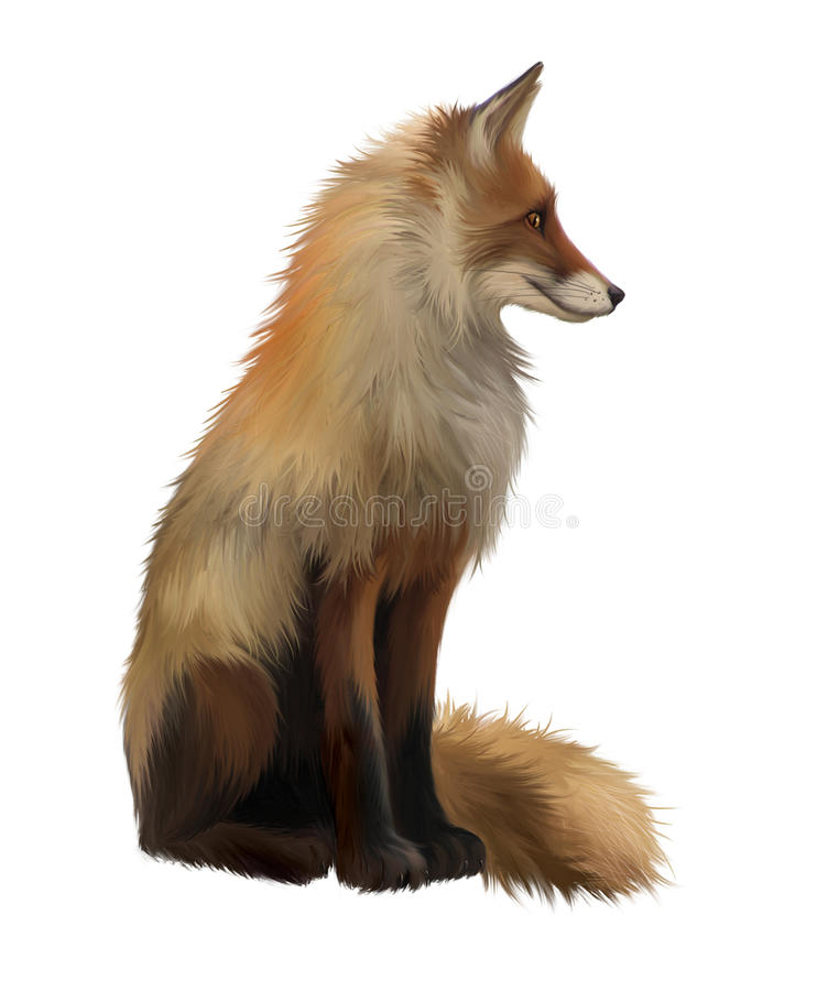 Adult fox , Isolated realistic illustration on whi. Te background stock illustration
