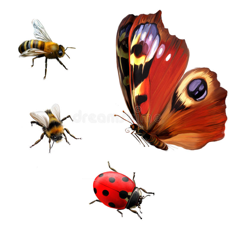 Butterfly, Ladybug, and Bees royalty free illustration