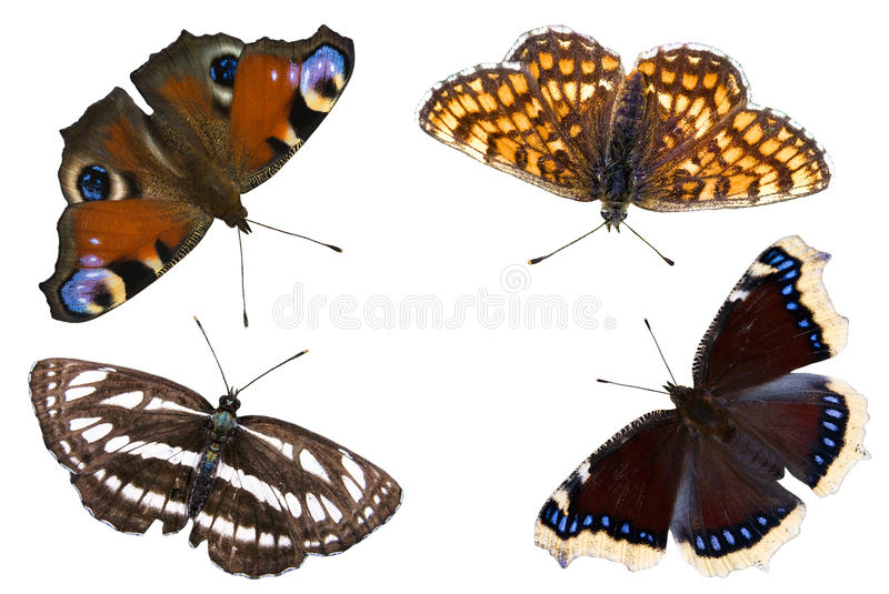 The four butterflies royalty free stock photography