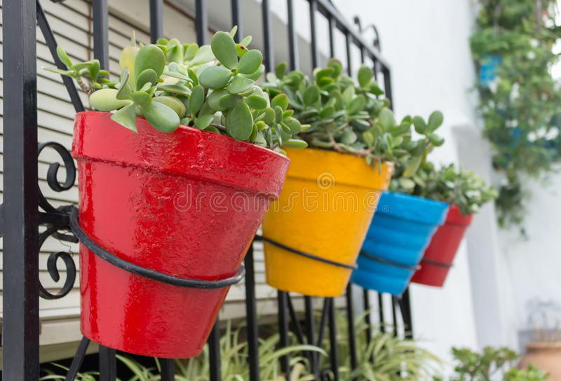 Four colored flower pots with green plants are hanging in a row. stock image
