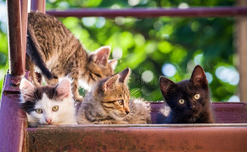 Four colorful kittens on a natural background. Summer shot. Selective focus royalty free stock photos