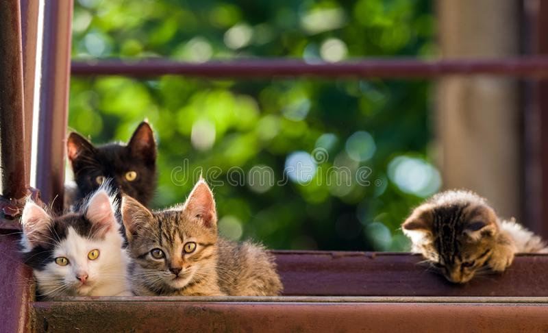 Four colorful kittens on a natural background. Summer shot royalty free stock images