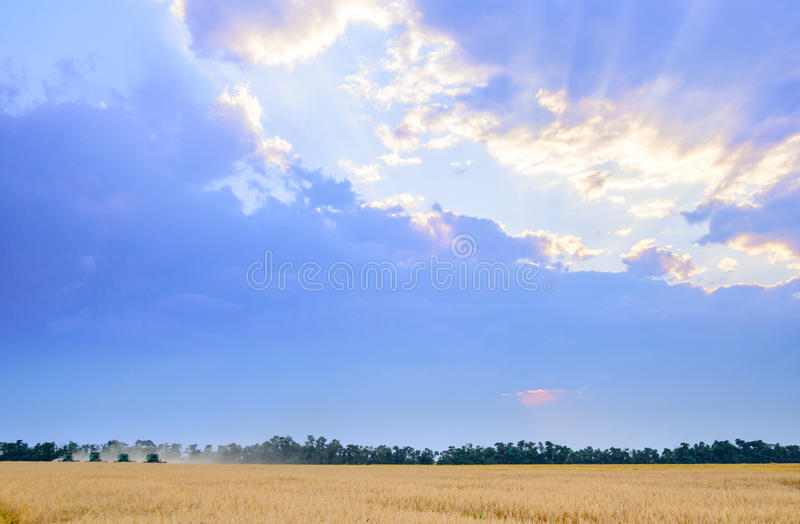 Four Combine Harvesters Harvesting Wheat in Field under Beautiful Sunset Sky royalty free stock images
