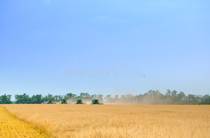 Four Combine Harvesters Harvesting Wheat in Field under Blue Sky stock images