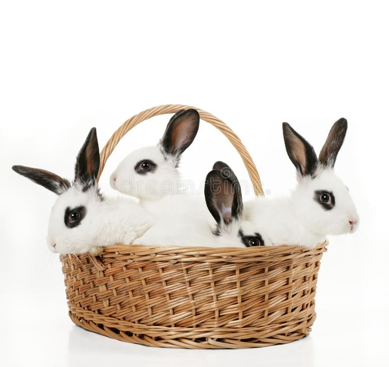 Four cute bunnies royalty free stock image