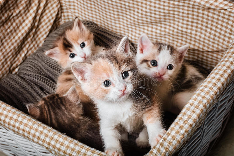 Four cute kitten royalty free stock photo