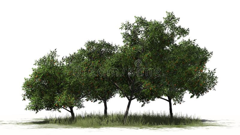 Four different peach trees with fruits on a grass area royalty free stock photography