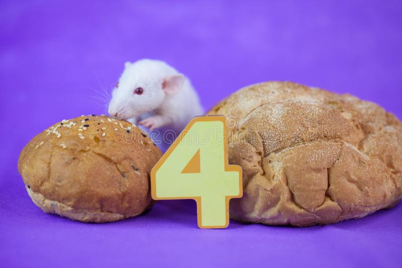 Four digits. mouse decorative. rat home. symbol of the. Chinese new year 2020. bread roll royalty free stock photo