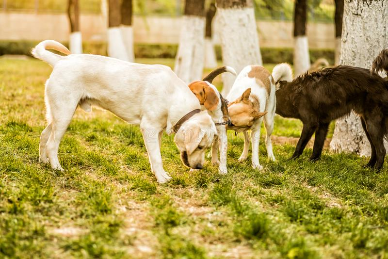 Four dogs playing in the park royalty free stock photography