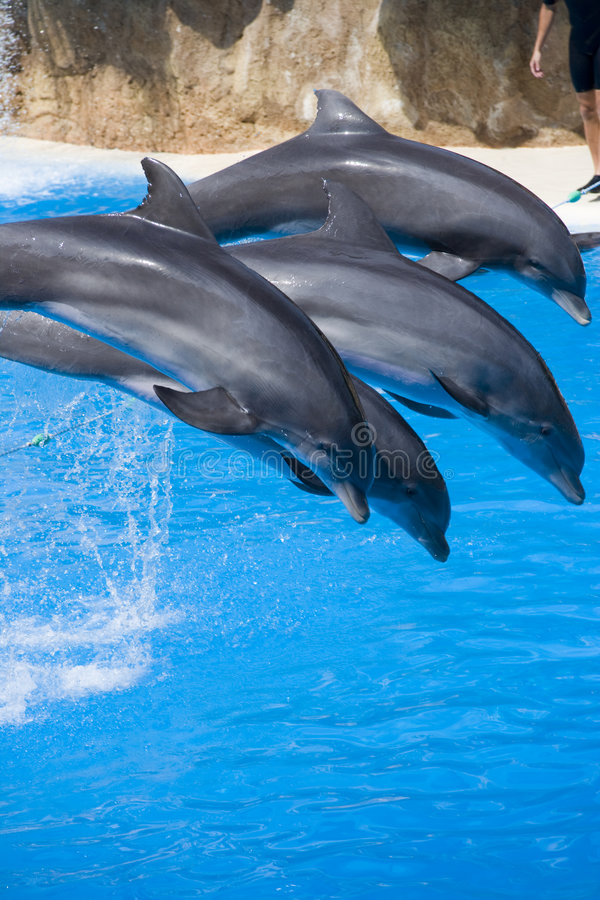 Download Four dolphins stock photo. Image of pair, ocean, leap - 4240346