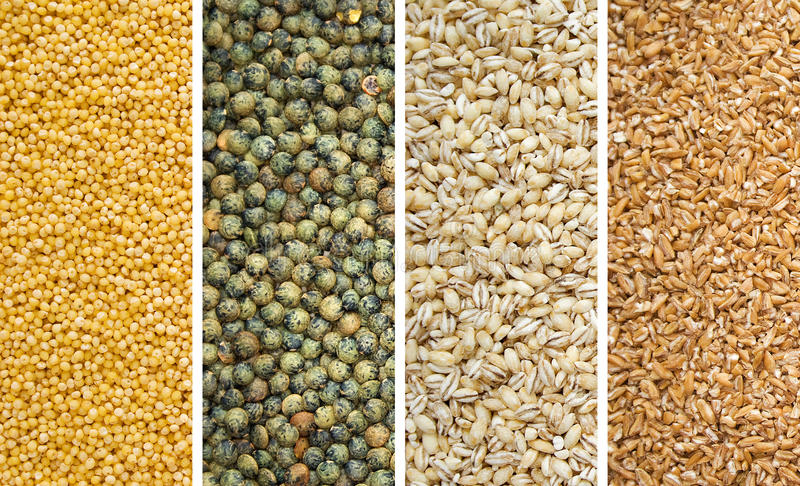 Download Four Dried Grains Stock Photos - Image: 13161783