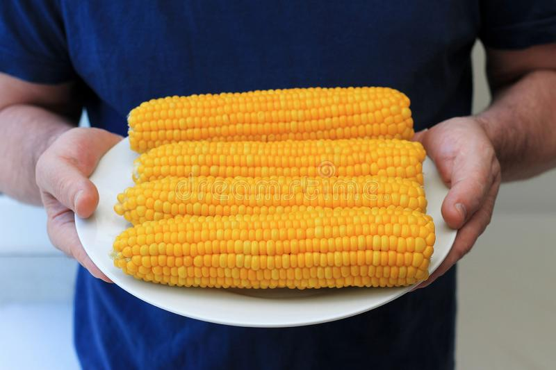 Four ears of boiled corn on a plate in male hands. Tasty and healthy organic food from the farmer. Vegetarian table. Fresh product royalty free stock photo