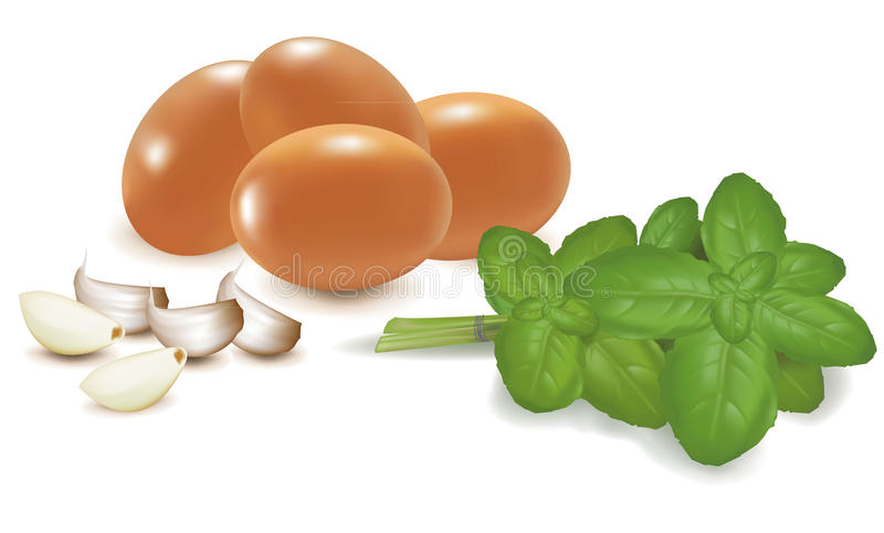 Download Four Eggs With Basil And Garlic. Stock Vector - Image: 17674175