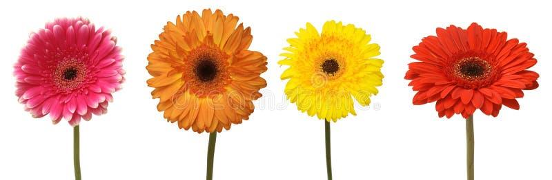 Four flowers stock photo